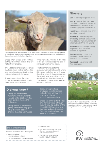 gd0317-secondary-fact-sheet_b1_sheep-the-wool-producers_page_2