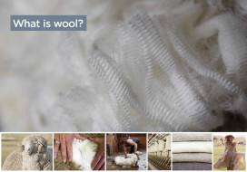 gd0346-primary-fact-sheets_what-is-wool_page_1